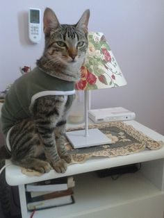 My cat Biriba. She was mad about wearing clothes!