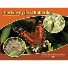 #carolinaextracredit and @Carolina Krupinska Biological Supply Company  This would go awesome in this unit for living things.  STC Literacy Series: The Life Cycle of Butterflies, Pack of 8