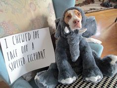 Dog shaming..Is this what they mean when they say...let the punishment fit the crime?  :-) #funnydogshaming #dogshaming