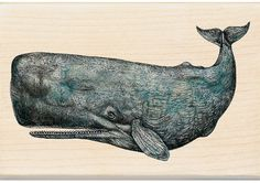 Whale by Courtney Davis Whale Sketch, Whale Art, Sea Whale, Whale Decor, Besties, Whale Illustration, Whale Tattoos, Save The Whales, White Whale