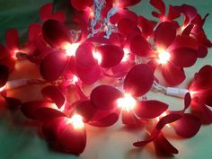 35 Red Orchid Flower Lights