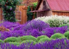 die besten 25 wann lavendel schneiden ideen auf pinterest obstgarten s en und gem sebeet. Black Bedroom Furniture Sets. Home Design Ideas