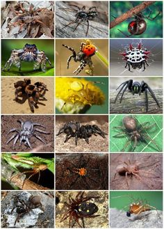 Spiders - Spider Identification - Types of Spiders, Anatomy, Life Cycle | Do My Own Pest Control