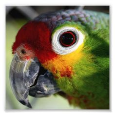 Beautiful Parrot Pho