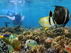 Snorkel in Rosario Islands and Playa Azul provided by Backpackers Best Snorkeling, Southern Caribbean, Island Tour, Cruise Travel, Cruise Vacation, Best Places To Travel, Best Vacations, Disney Vacations, Archipelago