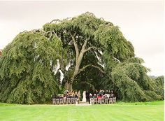 The most beautiful wedding site in the world...The Hobbit Tree ceremony site near Paradise Ireland...check out the entire wedding...Irish Wedding II on Oncewed.com