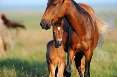 Wild mustang and baby -- we saw these up close in the Black Hills Sanctuary in South Dakota. They are doing marvelous things to allow the mustangs to roam free.