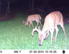 Deer Food Plot Seed - Chicory, Turnips, Canola, Sugar Beets - Monsterbuck Food Plots