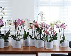 Jeito de Casa: A beleza das orquídeas!!!