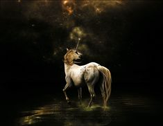 In the heart of the forest a unicorn is born. The trees hold gentle branches around it, the forest pools guard its secret; only the stars can see. Among the silent spaces of the trees it grows protected, nurtured... --Josephine Bradley-- (In Pursuit Of The Unicorn)