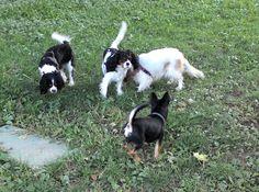 14/09/2015 - Torino con Billo, Lisa e Bobby