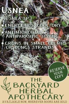 This mysterious lichen is an excellent herbal remedy for infections of all types. Usnea can be found in forested ares with clean air. #herbalmedicine #herbalism #foraging #naturalliving #usnea #herbs #uses Home Remedies For Spiders, Home Remedies For Warts, Warts Remedy, Healing Herbs, Medicinal Herbs, Natural Healing, Holistic Healing, Natural Life, Natural Health Remedies