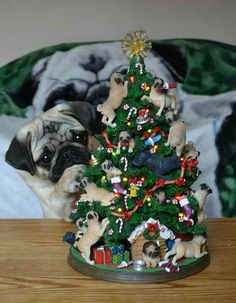 🎄🎶 All we want for #Christmas is #puglove! Thank you to @dapuglet 🎶🎄 ・・・ www.jointhepugs.com ・・・ #pug #pugpower #pugsnotdrugs #pugpuppy #cuteness #pugs #pugoftheday #puglover #pugnation #dogstagram #dogsofinstagram #puppyeyes #pugstagram #pugworld #pugplanet #dogsofinstaworld #petstagram #instadog #instapug #babypug #pugsofig #pugsforever