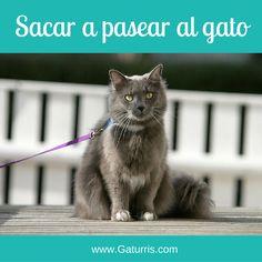 ¿Sabes que se puede sacar a pasear al #gato?  Te lo cuento cómo hacerlo en mi podcast. ¡Espero que te guste!  Podéis escuchar el podcast y ampliar información en: http://www.gaturris.com/podcast/convivencia/sacar-a-pasear-al-gato