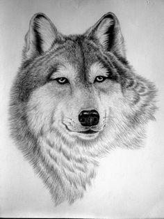 Wolf - artist unknown,