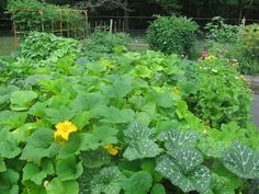 Prince Snow Farm: Please Vote for My Garden :)