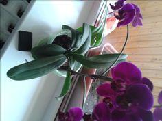 Орхидея и её защитник ( активатор )