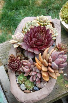 Sexy Succulent Container | Flickr - Photo Sharing!