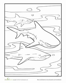 Color The Pod Of Sharks Drawings Animal Drawings Coloring Pages