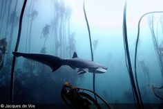 I'm very grateful to be featured on the prestigious DivePhotoGuide website as photographer of the week.