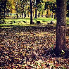 Crunchy fall leaves at Highland Park in #kokomo, #indiana. Photo by @kmdenta.