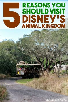 5 reasons you should visit Disney's Animal Kingdom. This theme park has some incredible attractions.