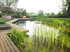 Natural pool pond with boardwalk Natural Pools Gallery @ Woodhouse Natural Swimming Pools Swimming Pool Pond, Natural Swimming Ponds, Natural Pond, Landscape Architecture, Landscape Design, Garden Design, Pond Landscaping, Pond Life, Water Features In The Garden