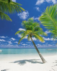This beach mural features a pristine and perfect tropical scene. Palm trees lean in white sand while sea and blue skies stretch out. Big Island Hawaii, Island Beach, Small Island, Tropical Beach Resorts, Beach Mural, Beach Pink, Summer Beach, Summer Time, Jamaica Vacation