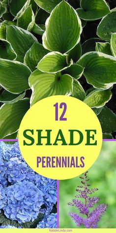 Beautify shady areas of your yard and garden by planting perennials that need shade to thrive! These low-maintenance perennials will work beautifully with your other plants and flowers, and they'll add color and texture, too!