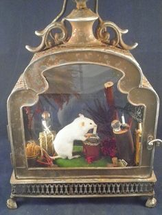 Antique Victorian inspired taxidermy white by VictorianTaxidermy