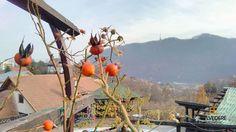 #exterior #autumn #garden #view #belvedererestaurant #outside #autumnbreeze #gorgeousview #brasov Indoor, Exterior, Vegetables, Pictures, Food, Interior, Photos, Essen, Vegetable Recipes