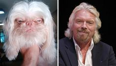 35 Animals That Look Like Celebrities