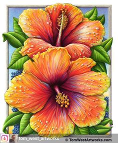 Photo by Simply Wonderful! on October La imagen puede contener: planta Hibiscus Flower Drawing, Flower Art Drawing, Hibiscus Flowers, Watercolor Flowers, Watercolor Art, Color Pencil Art, Photo Wall Collage, Arte Floral, Colorful Wallpaper