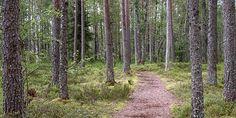 Lauhavuori National park, Isojoki Finland.