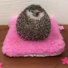Cute Little Animals, Cute Funny Animals, Funny Cute, Funny Animal Videos, Animal Memes, Funny Hedgehog, Hedgehog Food, Animals And Pets, Fur Babies