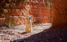 Les Ocres de Mormoiron avec son chien !