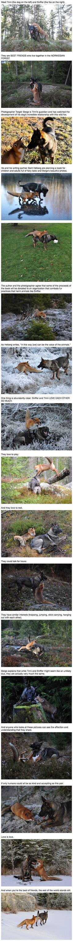 "Real life fox and the hound. ""Can't We All Get Along?"".  We humans can extract a lesson from them."