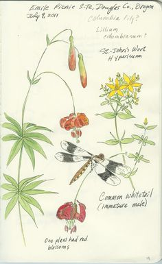 Sketching in Nature: Plant Identification