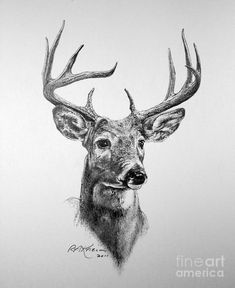 buck deer drawing by roy anthony kaelin - deer sketch art Deer Art, Moose Art, Buck Tattoo, Moose Tattoo, Deer Head Tattoo, Raven Tattoo, Stag Head, Tattoo Ink, Animal Drawings
