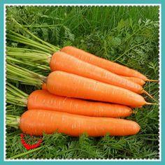 1 Package 400 Carrot Seeds  Good Flavor Nice Color Tast High Germination <3 Cliquez sur l'image pour voir les détails