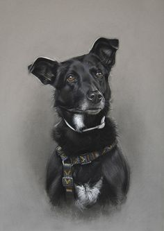Dog art by Amy Little.  Pia, 2014.  Soft pastel on paper.