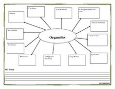 Cell Theory Graphic Organizer for Organelles