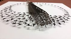 We've long been fans of Olympia, Washington-based artist Chris Maynard (previously) who assembles shadowboxes of cut feathers depicting the silhouettes of birds as they sing, perch, and swoop across the canvas. With a background in both biology and ecology the artist recalls working with feathers as