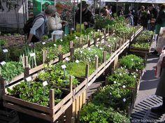 Bürkliplatz Market in Zurich // fresh herbs