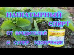 Summer House Garden, Home And Garden, Small Farm, Vineyard, Plants, Youtube, Sodas, Flora, Vineyard Vines