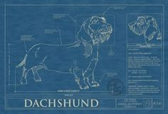131 best dog blueprints images on pinterest best dogs dog breeds animal blueprint company dachschund wirehair dog print malvernweather Image collections