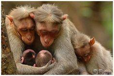 famille de singe, si tendre.