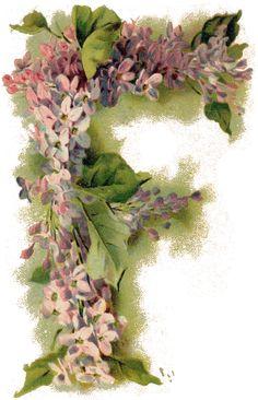 Vintage Floral 'F' ~ Zibi Vintage Scrap