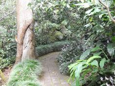 Camellia Gardens, located on the corner of President Ave and Kareena Rd, Caringbah. Parks In Sydney, Naming Ceremony, Camellia, Amazing Gardens, Garden Wedding, Perfect Place, Paths, Places To Go, Picnic