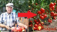 Sedláci z vesnice prozradily tajemství nejsilnějších sazenic, které rodí až do listopadu: A ta chuť k nezaplacení! Flora, Vegetables, Gardening, Diet, Lawn And Garden, Plants, Vegetable Recipes, Veggies, Horticulture